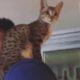 Кого волнуют травмы, если в кадре кот?