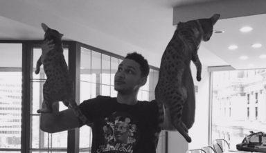 Новый флэш-моб в НБА: болельщики «Филадельфии» в честь победы поднимают котов