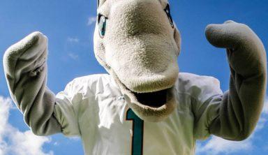 Майами Долфинс — факты о команде NFL