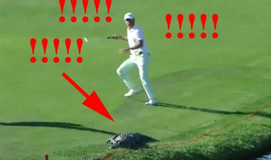 Аллигатор и два гольфиста на поле (ВИДЕО)
