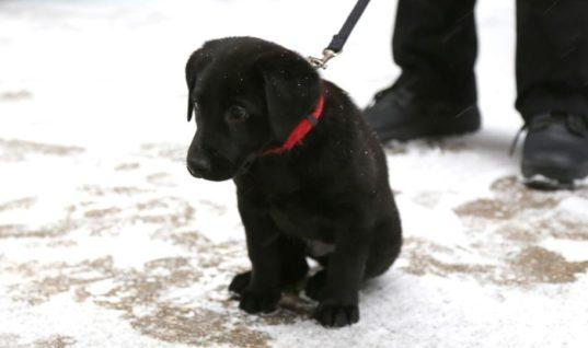 """""""Виннипег"""" объявил конкурс на лучшую кличку для щенка из службы безопасности"""