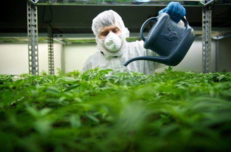 CBS не будет рекламировать марихуану во время Супербоула