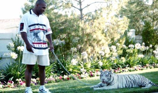 Тайсон рассказал, как у него появились тигры