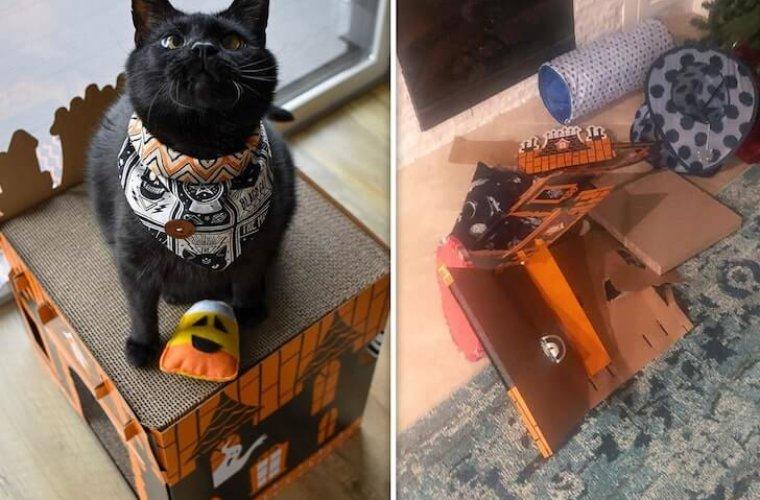 Питчера МЛБ обвинили в насилии по отношению к девушке и её коту
