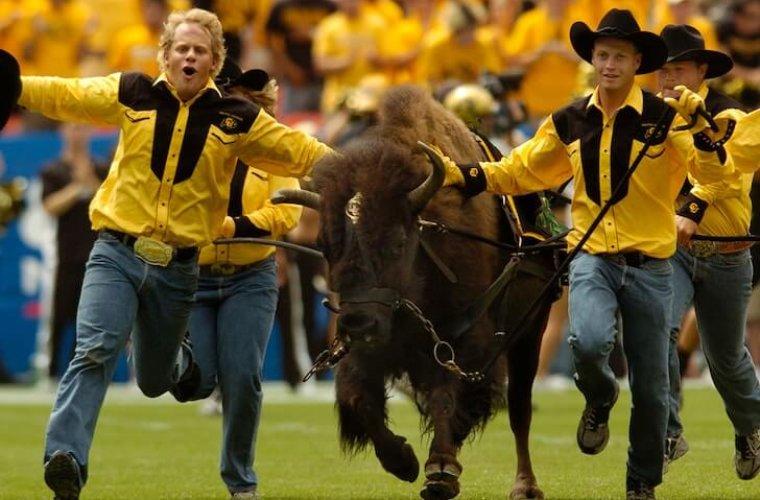 Маскота-буйвола пришлось отправить на пенсию из-за буйного нрава